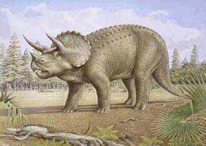 三角龙为什么有三个角 三角龙是食肉还是食草的恐龙