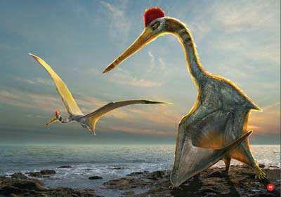 风神翼龙吃霸王龙是真的吗 风神翼龙是最大的翼龙吗