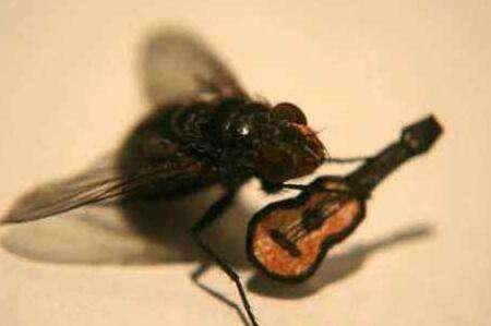 苍蝇为什么老是搓手 苍蝇搓手是为了干什么
