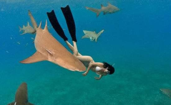 鲨鱼为什么不吃潜水员 鲨鱼不攻击潜水员的原因