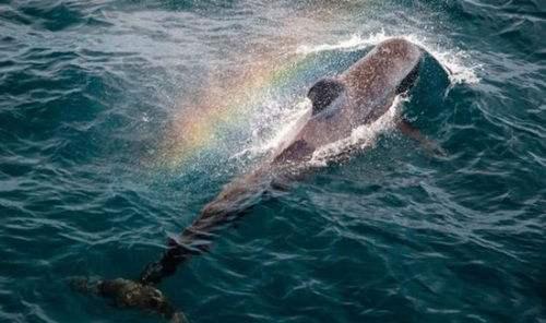 鲸鱼喷水的位置叫什么 鲸鱼为什么要喷水