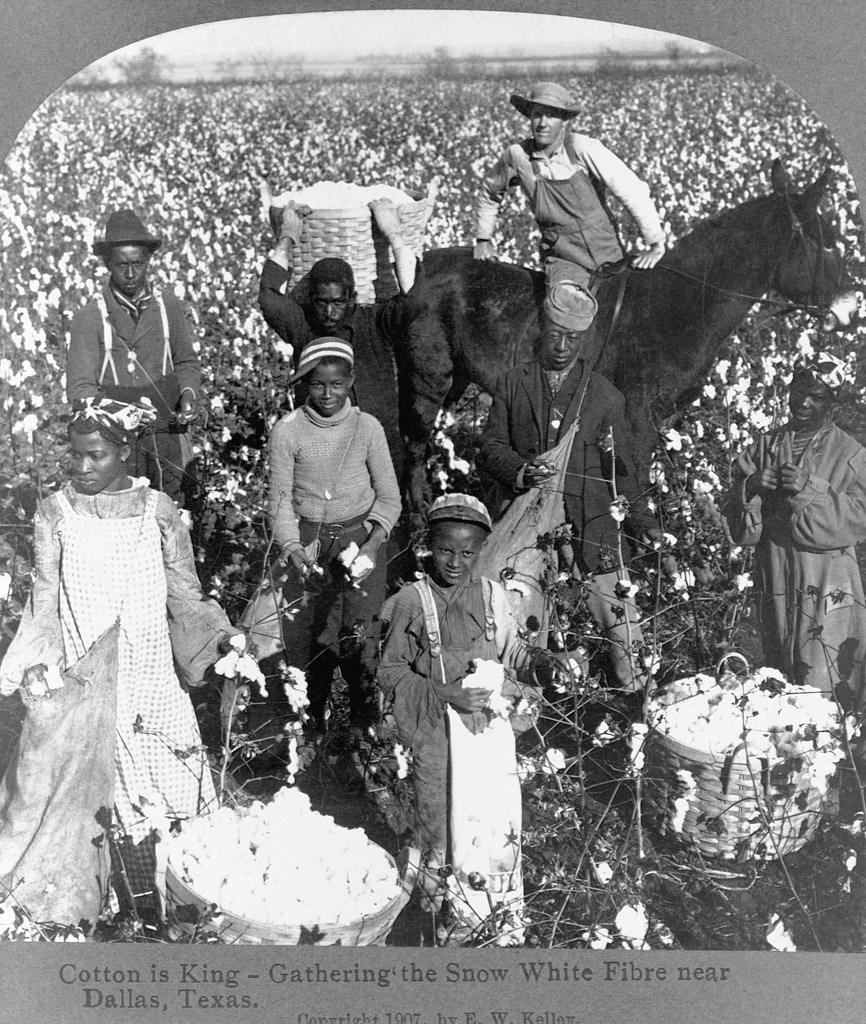 棉花和黑人之间有什么关系 黑人为什么不能摘棉花