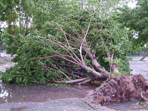 台风和热带风暴的区别 台风都是如何命名的