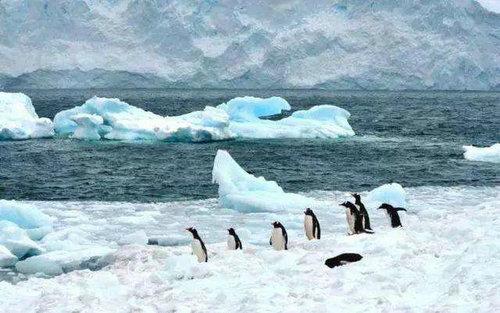 南极以前是什么样子的 地球两极为什么冷