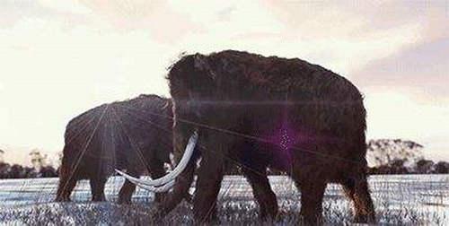 猛犸象复活进展如何 真的可能复活吗