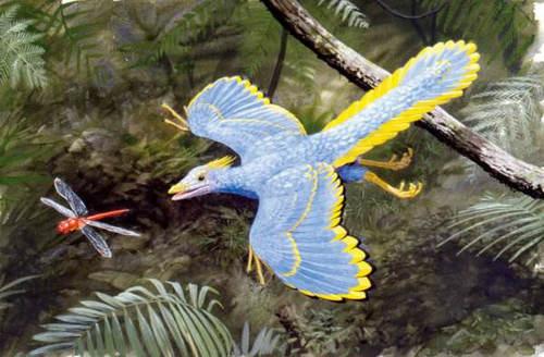 始祖鸟算鸟还是算恐龙 始祖鸟最后灭绝了吗