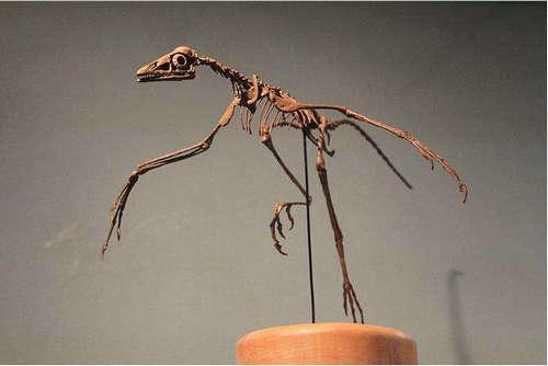 恐龙为什么会变成鸟类 恐龙变鸟类的说法可靠吗