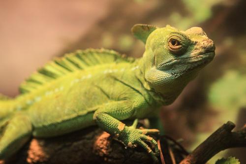 爬行动物的主要特征是什么 爬行动物都是冷血动物吗