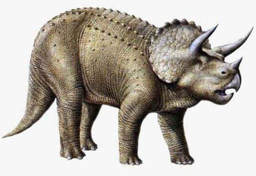三角龙的体重有多少 三角龙算大型恐龙吗