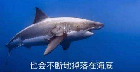 鲨掉是什么梗 鲨掉和鲸落有区别吗