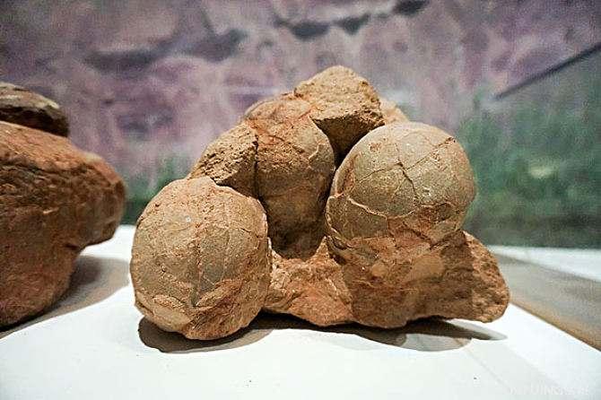 霸王龙的蛋有多大 恐龙蛋为什么不大