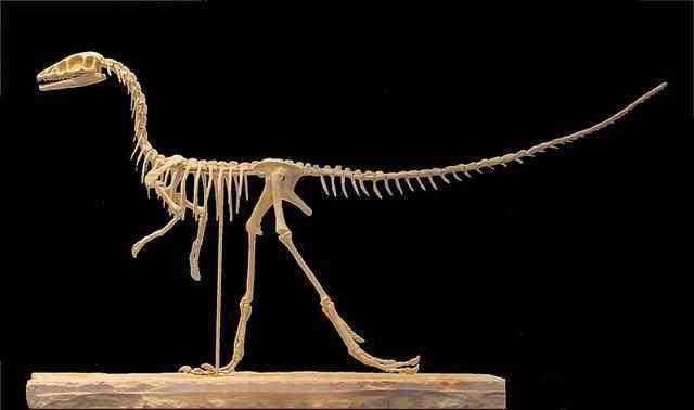 美颌龙是食肉恐龙吗 它吃什么食物