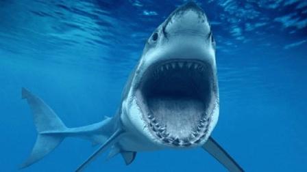 鲨鱼的祖先是什么动物 鲨鱼是从陆地进化的吗