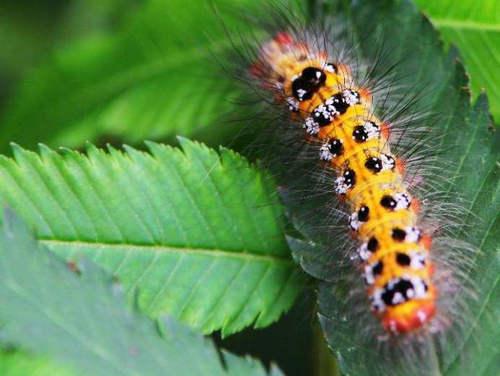 毛毛虫为什么能变蝴蝶 毛毛虫变蝴蝶的过程