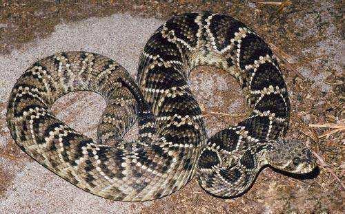 蛇能跑多快 蛇为什么能跑的那么快