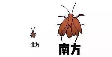 南北方蟑螂为什么大小不一样 原因是什么