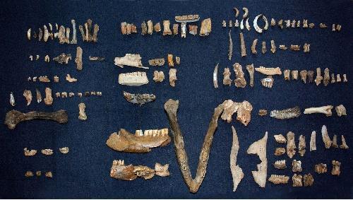 新旧石器时代距今多少年 新旧石器时代区别是什么