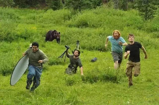 动物世界是怎么拍出来的 动物世界如何近距离拍摄