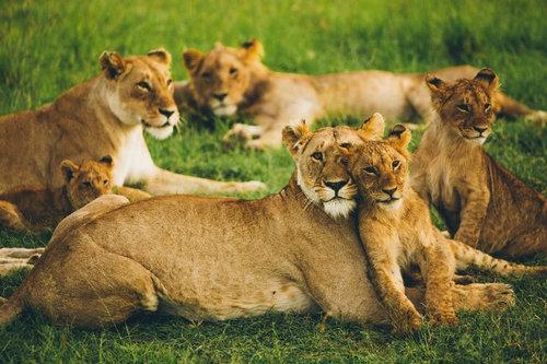 动物世界纪录片是谁拍摄的 动物世界纪录片还在拍吗