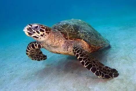 海龟能缩壳吗 海龟不能缩进龟壳吗