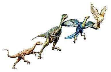 恐龙和鸟类的关系 恐龙进化为鸟类了吗