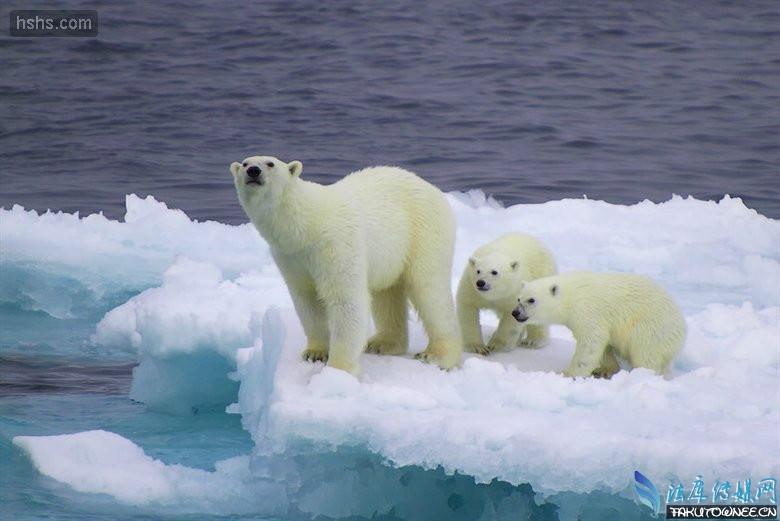"""""""板块说""""是许多科学家都认同的一种假说。这些科学家观点是:在很久很久以前,现在生活在南极的企鹅和北极的北极熊,它们都生活在基本相同的地区。突然,在某一个时期,地球板块突然断裂,分裂的地方正好在企鹅和北极熊生活的地区,这次分裂把绝大部分企鹅和绝大部分北极熊分裂在两个不同的板块中。随着时间的推移,那绝大部分企鹅生活的板块,企鹅一代代繁衍下去,而只有极小部分的北极熊,由于离群索居,慢慢失去繁衍能力,就逐渐消失了;与此相反,在另外一块绝大部分北极熊生活的地球板块中,北极熊一代代繁衍下去"""