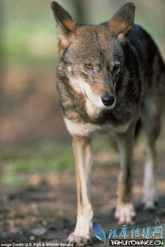 世界十大濒危珍稀动物