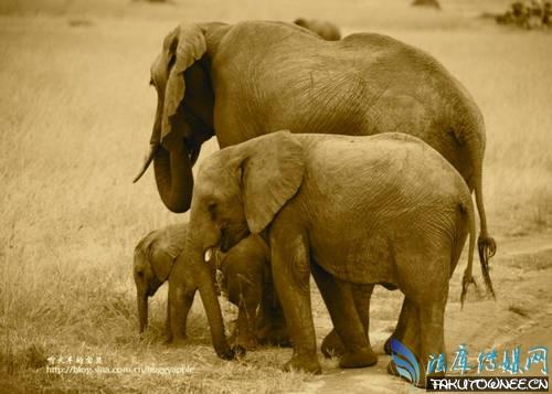 大象 动物 犀牛 野生动物