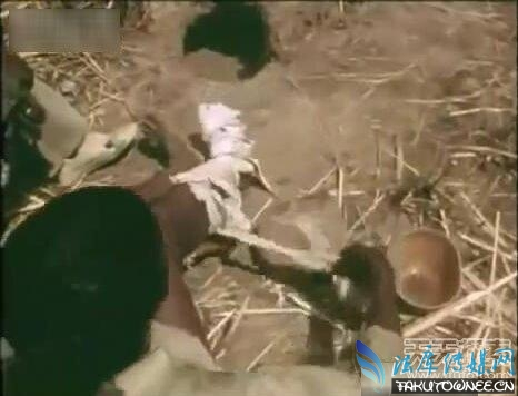 男子用腿作诱饵抓巨蟒,成年的蟒蛇有多大的力量?