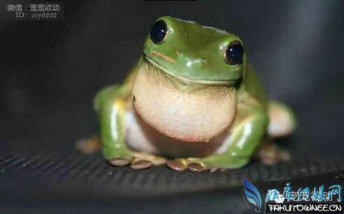 青蛙 身体结构结构