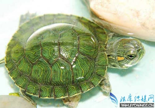 如何手工制作乌龟晒台